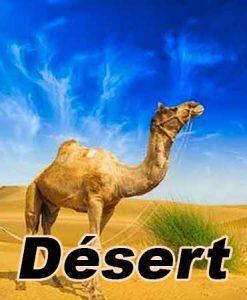 eliquide-DESERT-camel